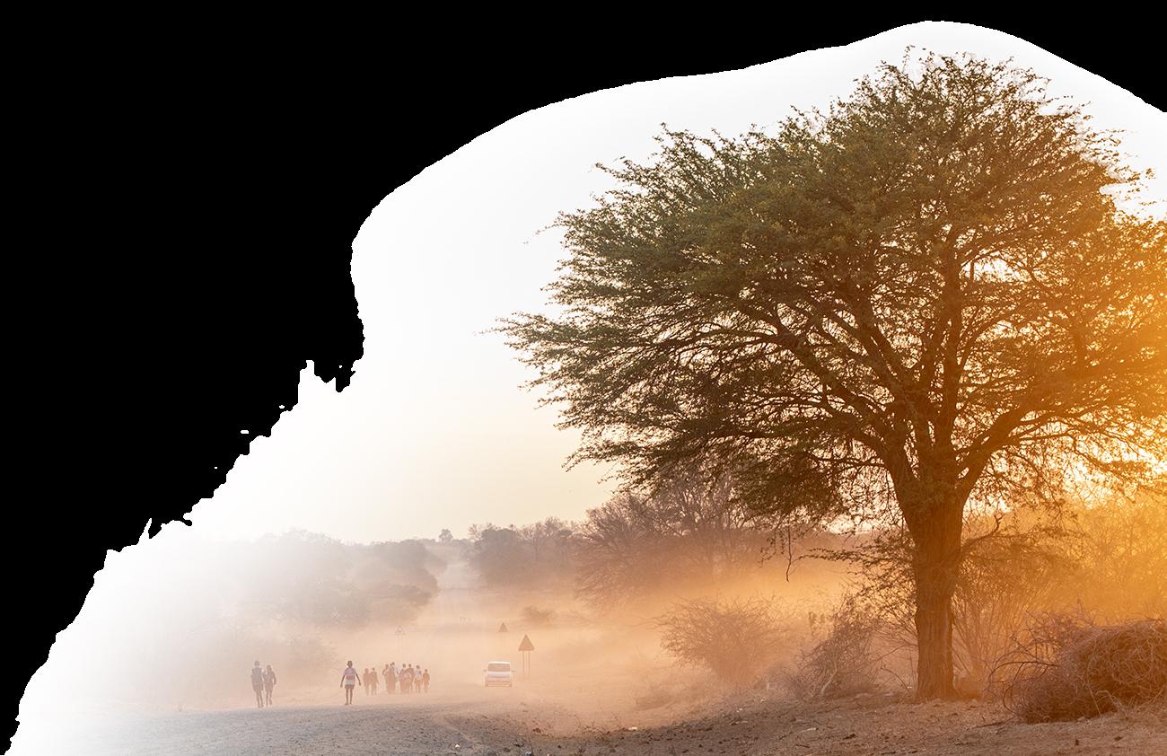 baum in Afrika im Sonnenuntergang